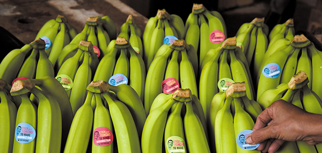 banana wars The eu has agreed a deal with latin american banana producers that will hopefully end the banana wars so what is the agreement and why has it taken so long.